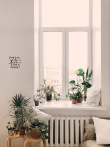 Indoor plants on the window