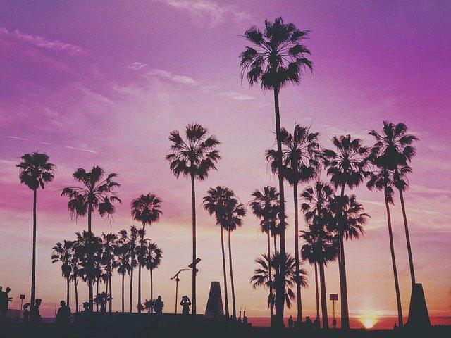Palms in Miami.