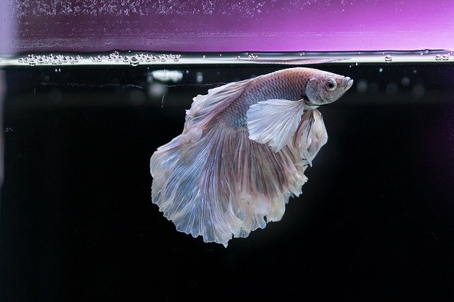 A fish in a aquarium