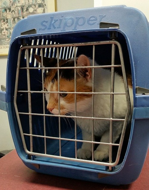 Prepare a suitable carrier for your pet